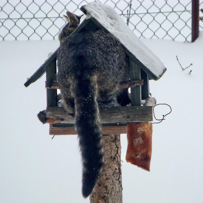 Karmnik Dla Ptaków W Naszym Ogrodzie Gazeta Powiatowa